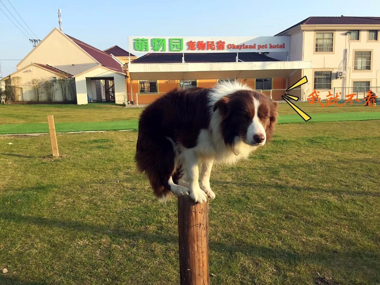 萌物园宠物寄养中心