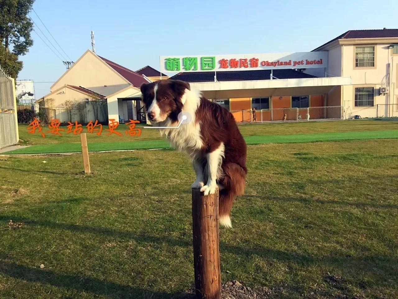 宠物寄养训练基地
