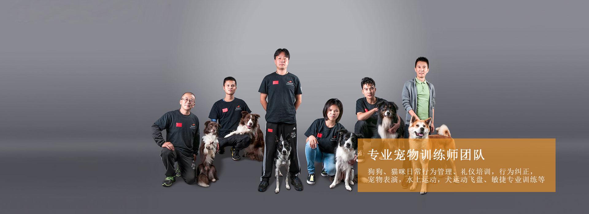 上海宠物训练