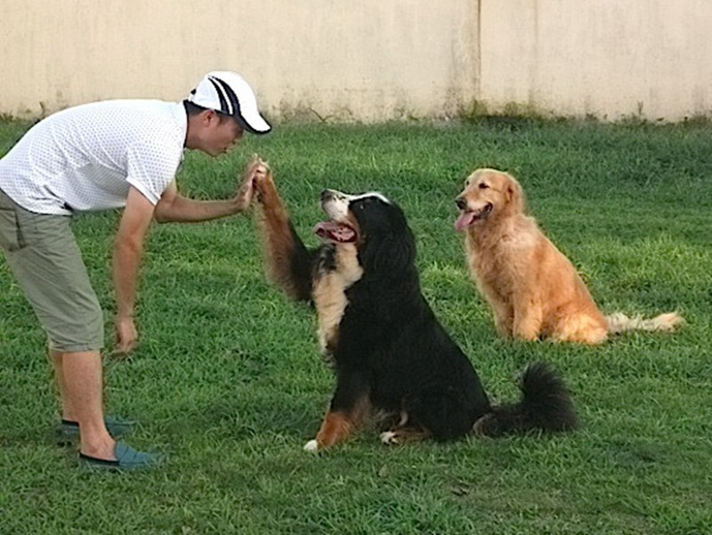 训练狗狗装死