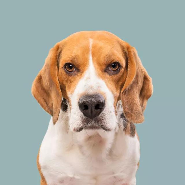 狗狗表情包