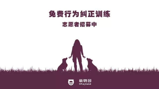 萌物园宠物训练志愿者招募